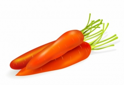 Free vector Vector trust to nature  Carrots Isolated