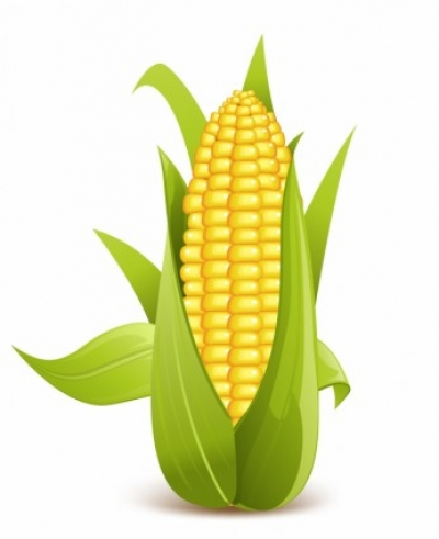 Free vector Vector trust to nature  corn
