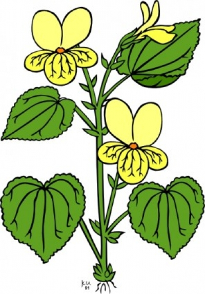 Free vector Vector clip art  Floral Plant With Green Leaves clip art