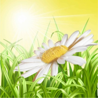Free vector Vector background  Free Daisy Vector Background