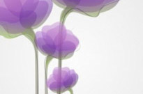 Free vector Vector abstract  Abstract Flower Background