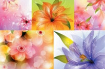 Free vector Vector flower  beautiful flowers vector background