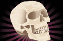 Free vector Vector misc  Free Realistic Skull Vector