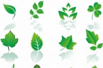 Free vector Vector plant  Leaf design element set