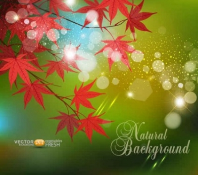 Free vector Vector background  Red Leaf Vector Background
