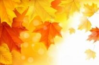 Free vector Vector background  Autumn Maple Leaves Background Illustration Vector