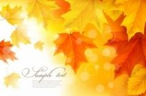 Free vector Vector misc  beautiful autumn leaves card 01 vector