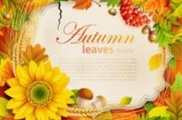 Free vector Vector background  beautiful autumn leaves frame background 07 vector