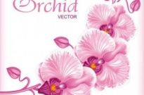 Free vector Vector background  Beautiful butterfly flowers background