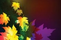 Free vector Vector background  beautiful maple leaf background 01 vector
