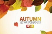 Free vector Vector background  beautiful maple leaf background 02 vector