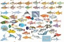 Free vector Vector misc  Big Vector Collection of Different Fish