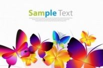 Free vector Vector misc  Colorful Butterflies Vector Art