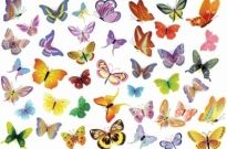 Free Vector Set of Butterflies Decoration Free vector 2.77MB