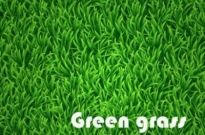 Free vector Vector background  Green grass vector background