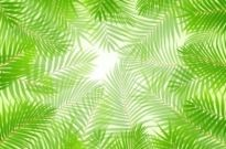 Free vector Vector background  green leaves theme background 01 vector