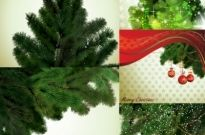 Local christmas tree vector Free vector 15.01MB