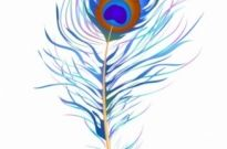 Free vector Vector misc  Peacock feather (Watercolor)