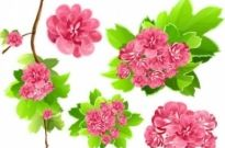 Free vector Vector background  Pink Flowers Vector background