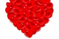 Free vector Vector background  Red Love Petal Background