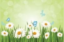 Free vector Vector flower  Spring Daisy Background